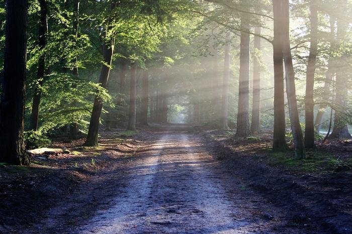 Sophrologie marche forêt Lille
